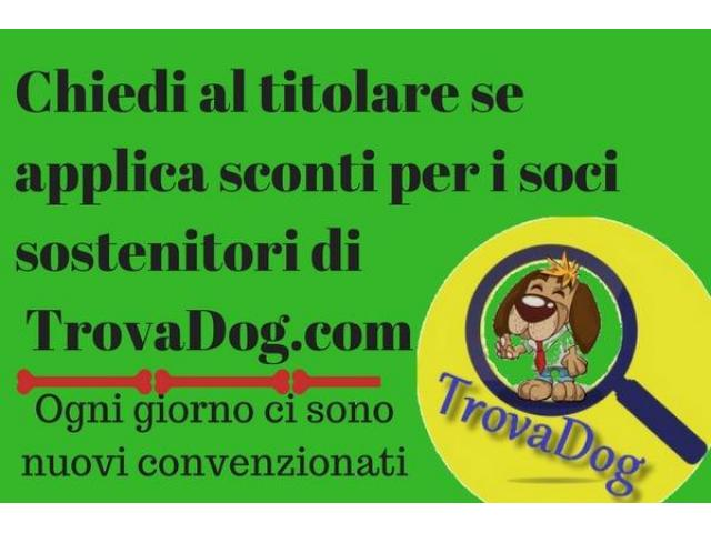 Ambulatorio Veterinario Dott. Sergio Spirito - 2/2