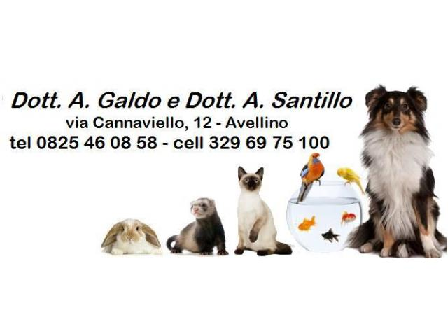Ambulatorio Veterinario ANDROMEDA - 1/3