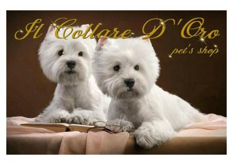 Il Collare D'oro - Pet's shop