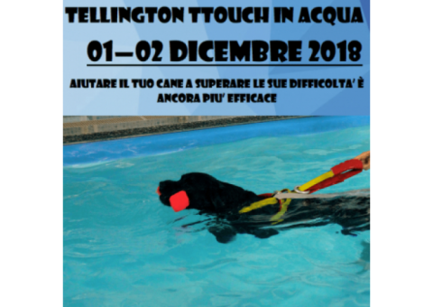 Tellington Ttouch in acqua